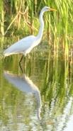 Birdreflection
